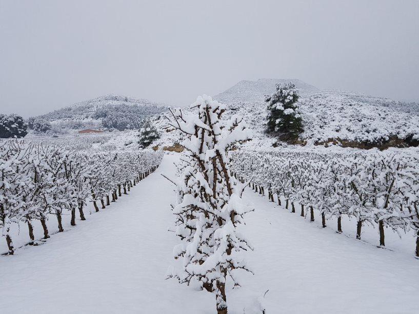 cultivo almendro en seto nevado