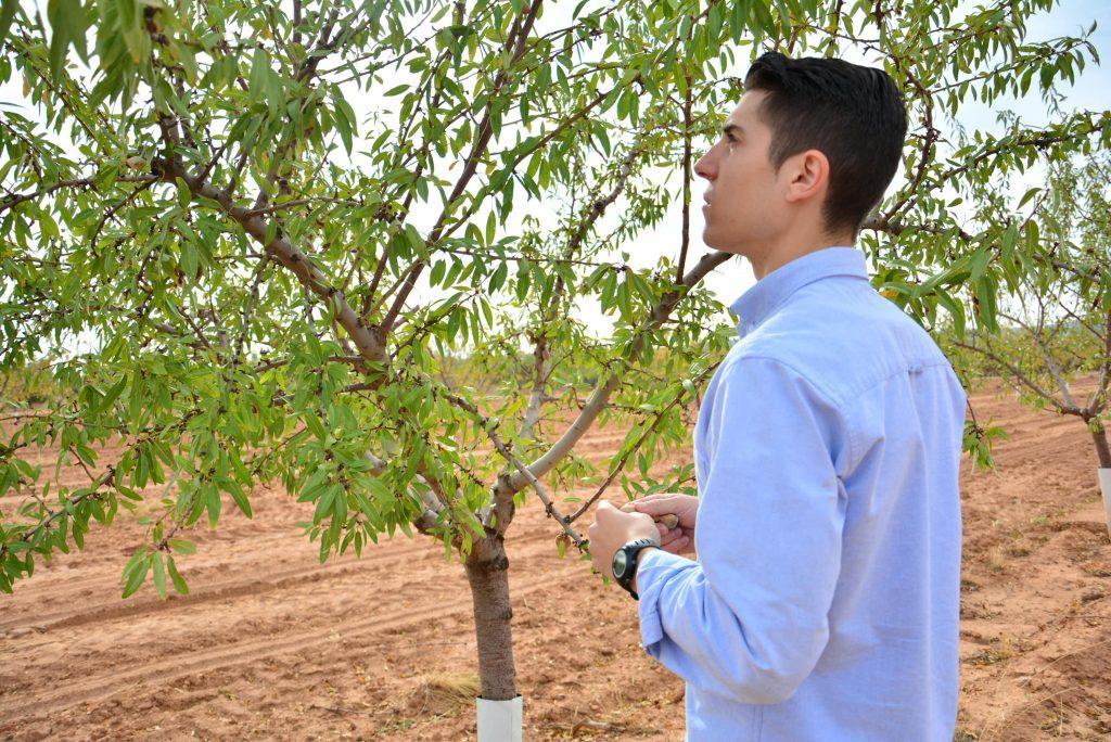 supervision enfermedades en plantacion de almendros