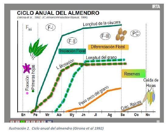 ciclo anual del almendro