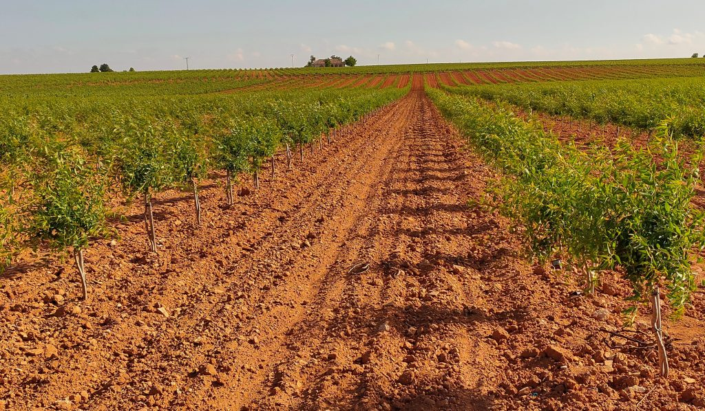 laboreo del suelo en plantación de almendro en seto