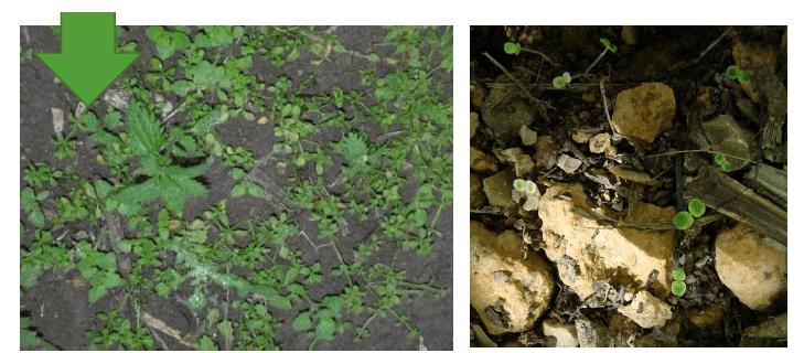 resultado herbicidas almendros