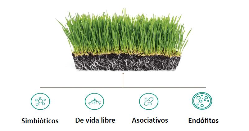 microorganismos cultivos