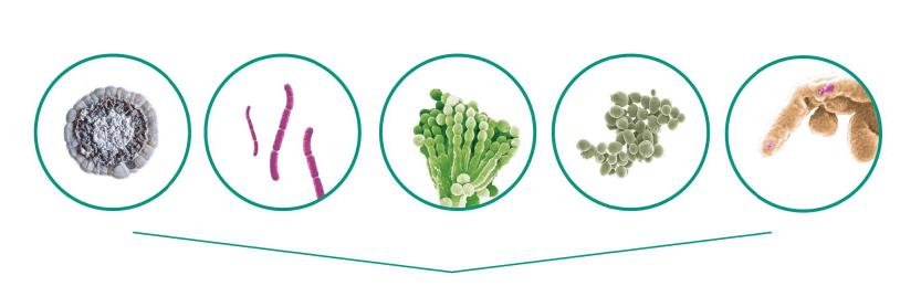 microorganismos empleados en agricultura