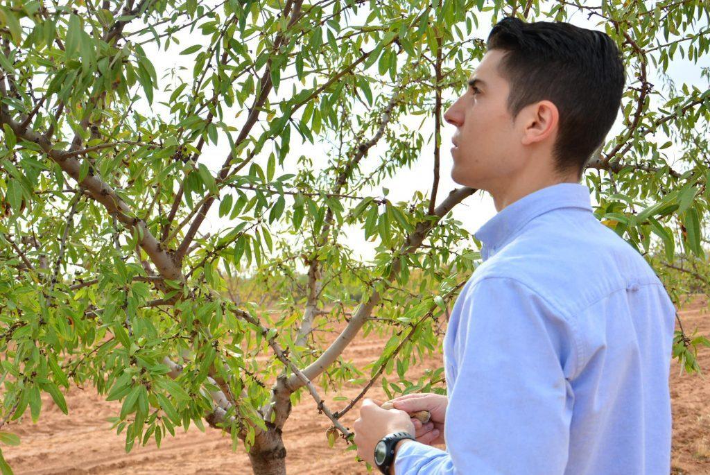 evaluacion para fertilizacion foliar